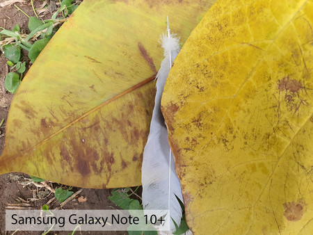 Samsung Galaxy Note 10plus Macro Dia 01