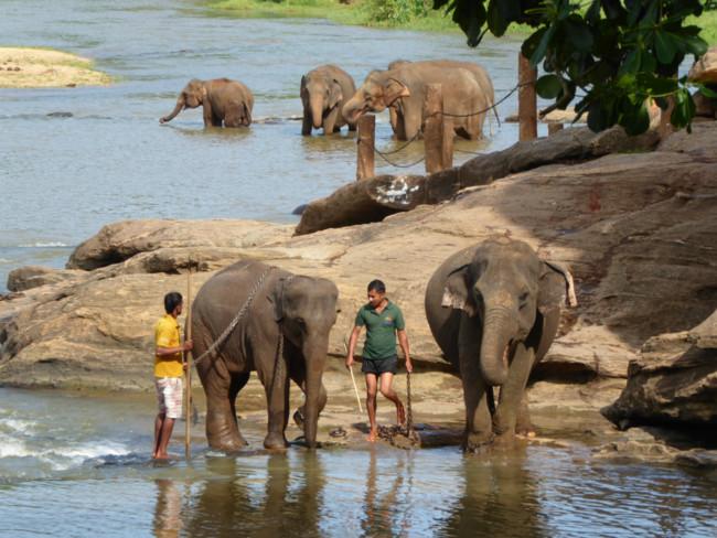 Oliphant Pannawela Sri Lanka