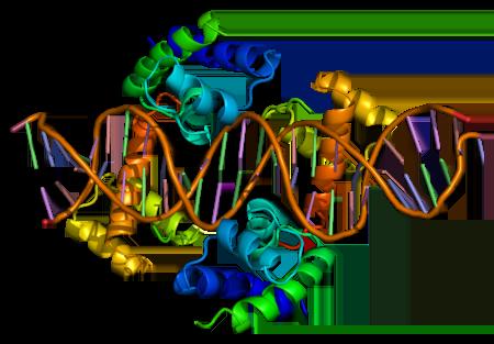 Protein Pou1f1 Pdb 1au7