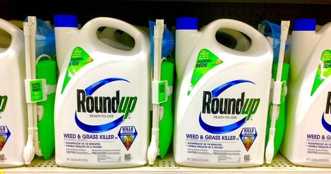 Permalink to La histórica multa contra Monsanto hace temblar el mundo de la agrotecnología: Bayer ya pierde más de un 15% en bolsa