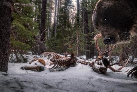 C Zack Clothier Wildlife Photographer Of The Year