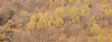 How to improve autumn colors in our photographs with the help of Adobe Photoshop