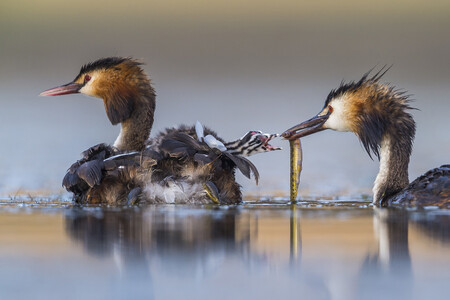 R Jose Luis Ruiz Jim R Nez Wildlife Photographer Of The Year