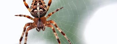 La apuesta por la ingeniería de proteínas para sustituir al plástico: un mundo hecho de sedas de araña y celulosa de abedul