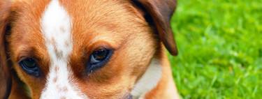 Los animales domésticos pueden suponer un riesgo para nuestra salud