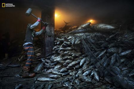 Overfishing South China Sea