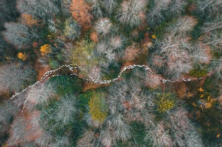 55677 - Forest Path - Mehmet Aslan