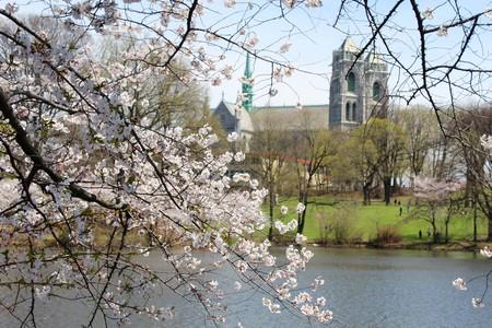 Newark cerezos en flor
