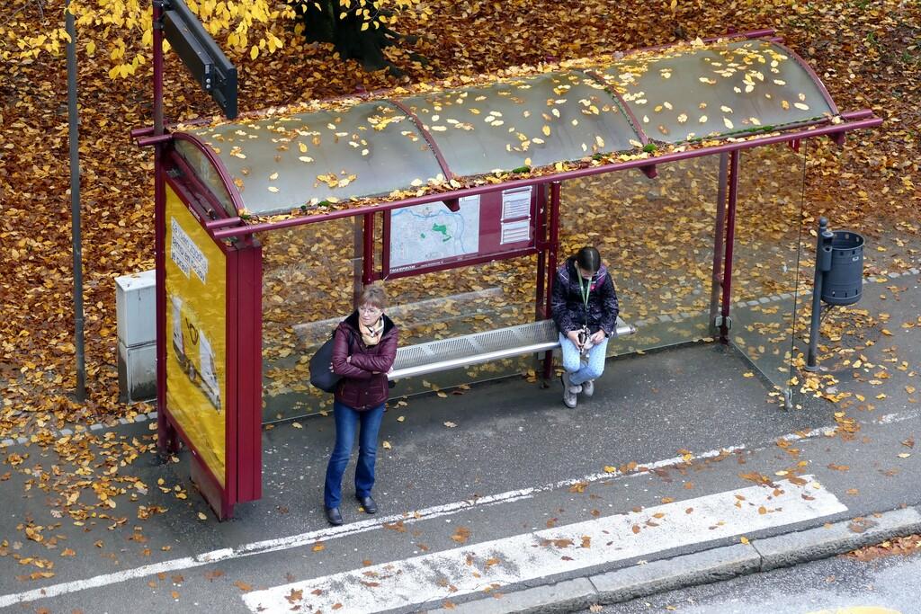 Cuántos más árboles, menos tarda el bus: así percibimos los tiempos de espera en nuestras cabezas