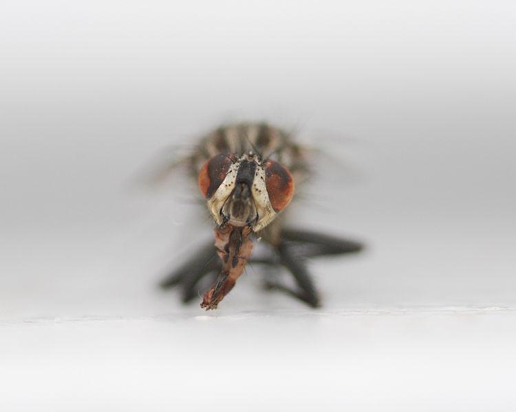 Permalink to El holocausto de los insectos: estamos viviendo el mayor evento de extinción desde hace más de 60 millones de años