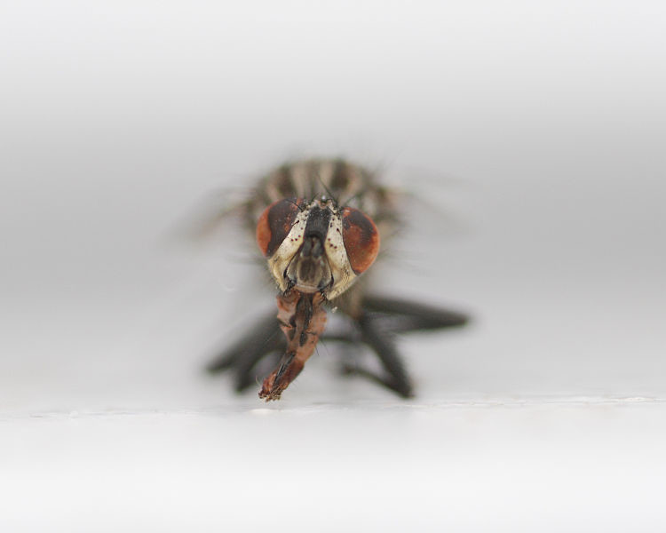 El holocausto de los insectos: estamos viviendo el mayor evento de extinción desde hace más de 60 millones de años