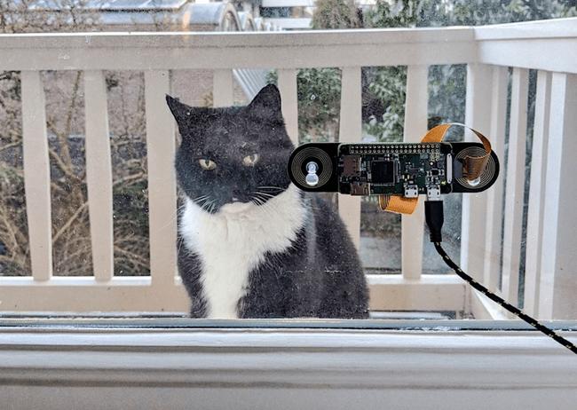 Gato con raspberry Pi