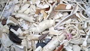 Ivory pieces after destruction in Belgium