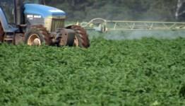 Image result for potato pesticide ban