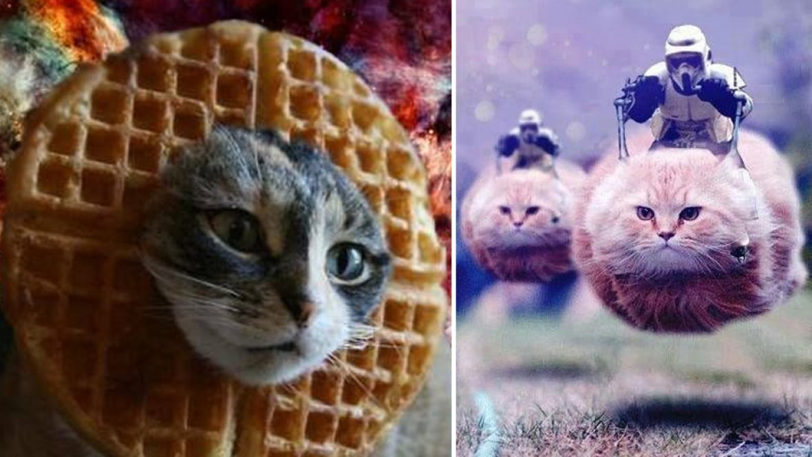 Belgians Tweet Cat Pics In Following Orders Not To Reveal