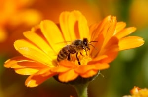 SCIENCE-PESTICIDES/BEES