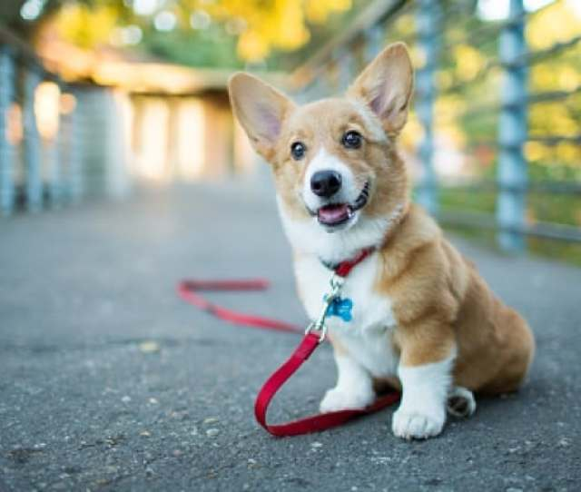 Leaving A Dog Tied Up Unattended Poses Great Risk To Both Dogs And Public Safety Dogs Can Become Stressed Suffer In Extreme Temperatures And Act Out In