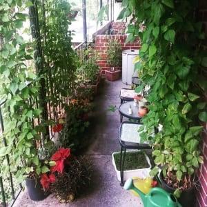 si-full-garden