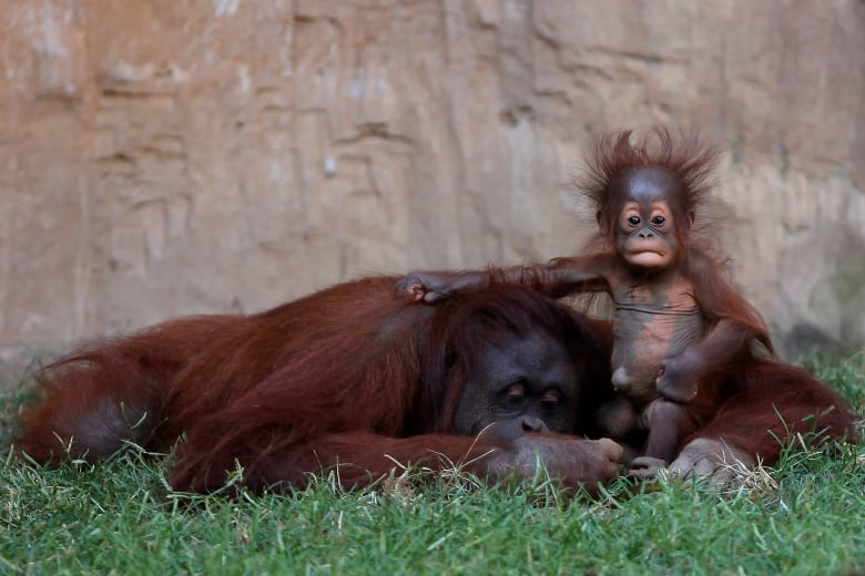 baby animals born in