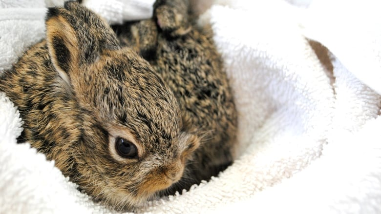 hare births in calgary