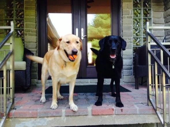 Tim Pedersen dogs