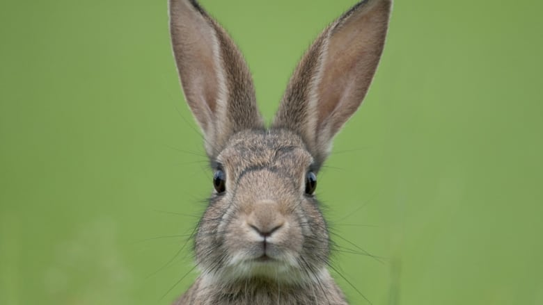 province warns rabbit owners