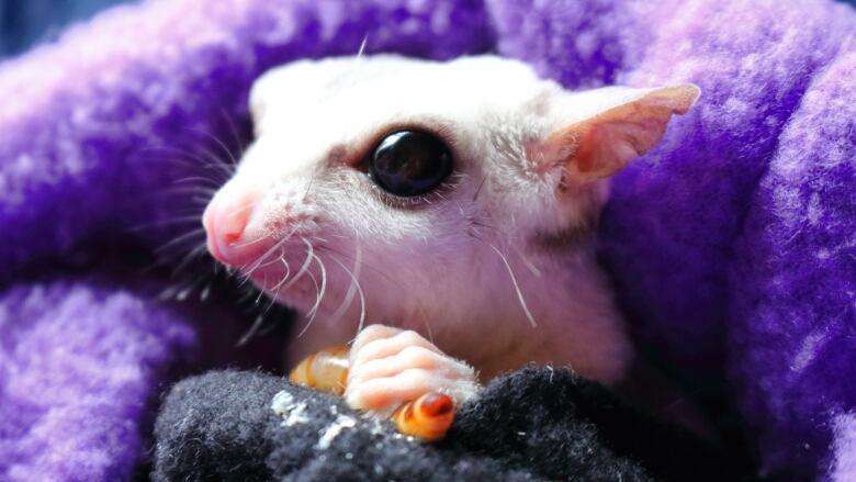 weird cute big eyed