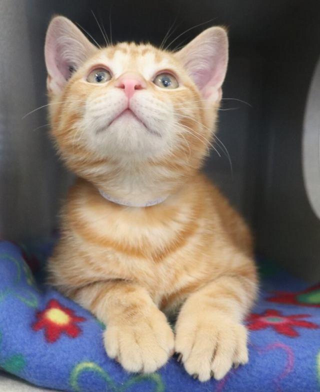 June boom in kittens fills up Calgary Humane Society shelter