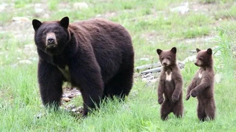 we re in bear