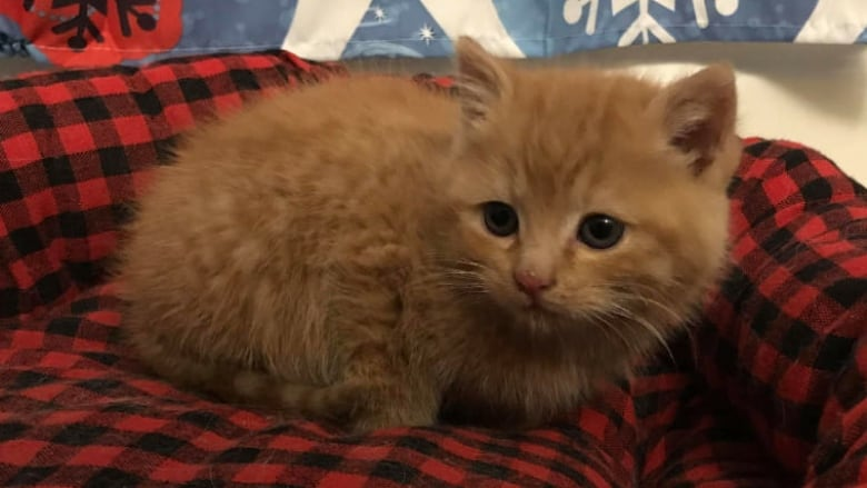 couple discovers kitten under