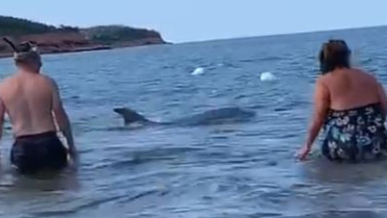 dolphin swims with beach