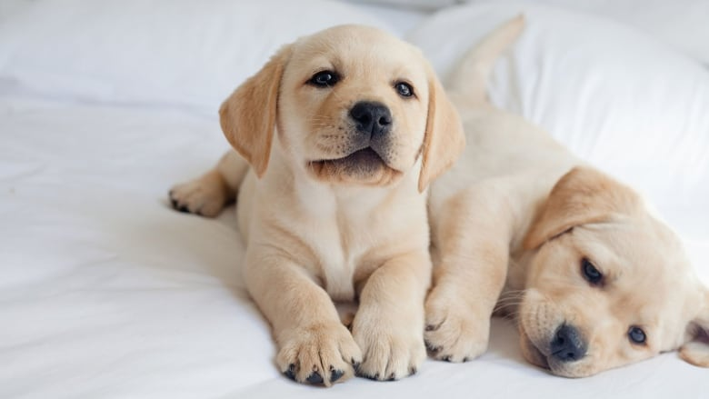 Puppies Get Pimples Plus 9 More Facts That Might Surprise First Time Dog Parents Cbc Life