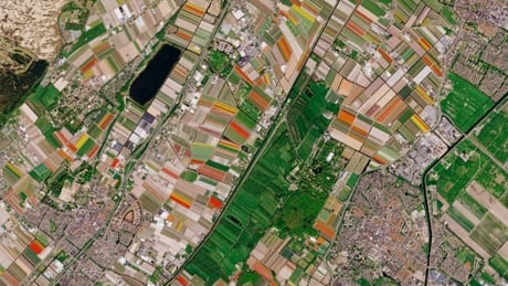 Earth observation satellite captures spring tulips in the Netherlands