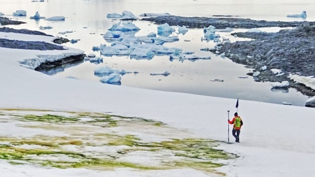 Climate change turning Antarctica's snow green | CBC News