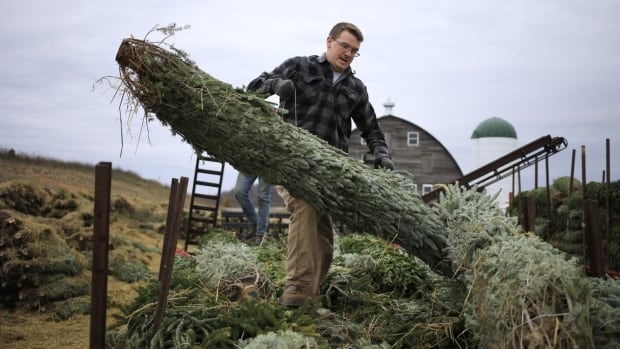 Demand for Christmas trees booms as gloomy year of COVID-19 needs some jollying