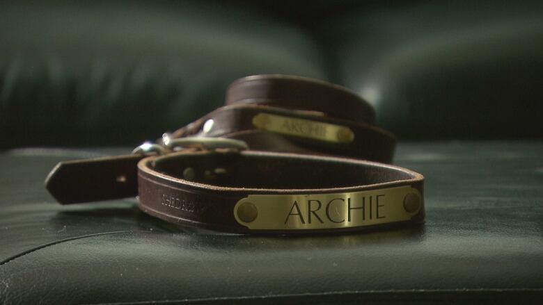 archie s leash