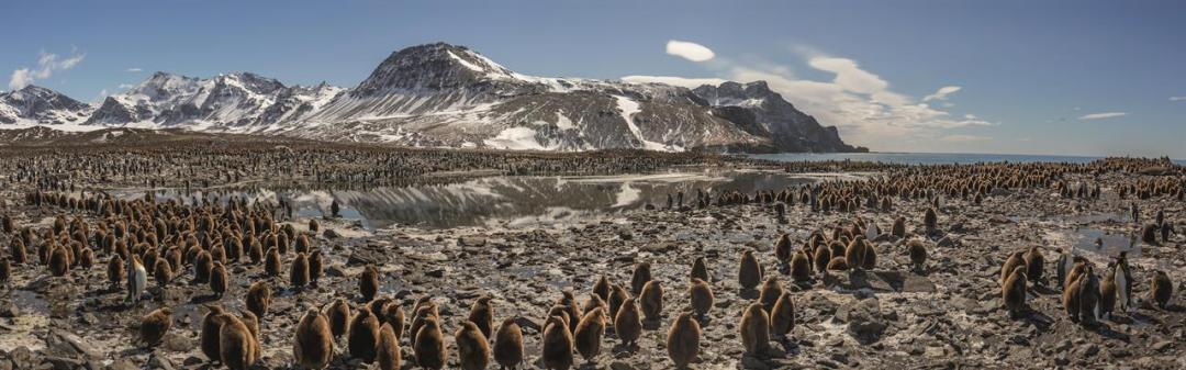 This Beach Contains One Of The Largest Penguin Colonies In The World, And One Of The Densest Aggregations Of Life On The Planet