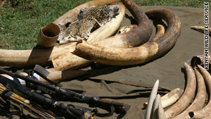 Illegal ivory, weapons and animal skins seized in Kenya during Monday's raids.