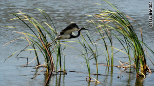 Conservation groups say birds, now in the prime breeding season, are especially at risk.