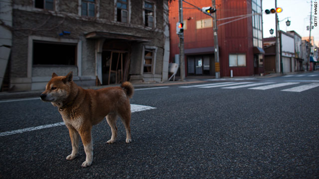 A dog wanders Tuesday about 4 miles from Fukushima Nuclear Power Plant in Futaba, Fukushima Prefecture, Japan.