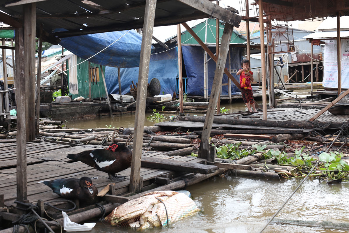 Most residents here are fish farmers. Beneath the platform on which the ducks are resting is a net teeming with fish, which will be fattened up to maturity over the course of months to provide what is often the family's sole source of income.