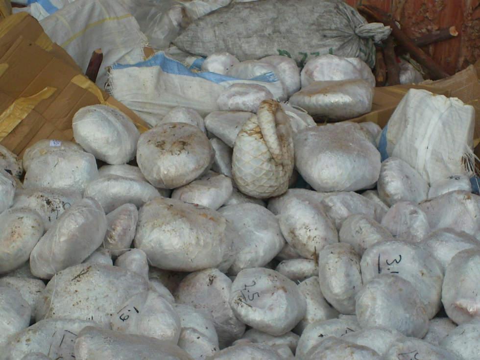 Resultado de imagem para pangolins
