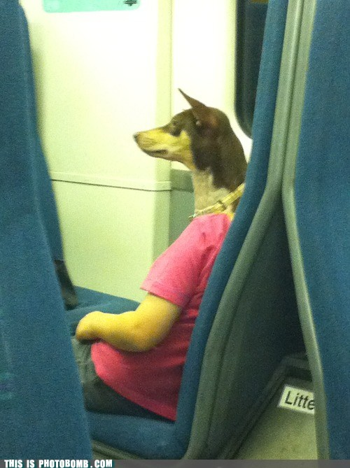 train passenger with dog's head, photobomb, comedy guys defensive driving blog