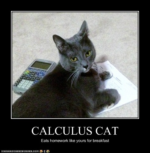 CALCULUS CAT