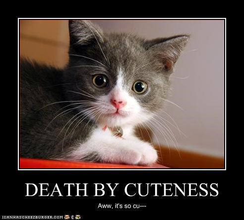 death by cuteness cheezburger