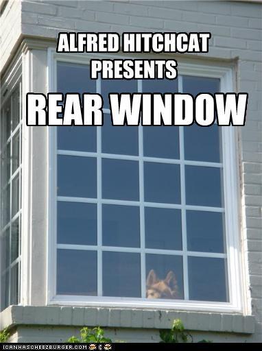 Window Meme : window, Hotdog, Window, Funny, Pictures, Memes, Puppy, Cheezburger