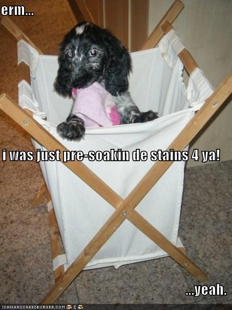 Weiner Dog Meme : weiner, Hotdog, Dachshund, Funny, Pictures, Memes, Puppy, Cheezburger