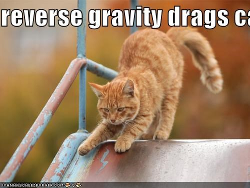 reverse gravity drags cat