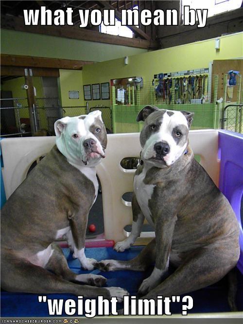 Pitbull Dog Meme : pitbull, Hotdog, Pitbulls, Funny, Pictures, Memes, Puppy, Cheezburger