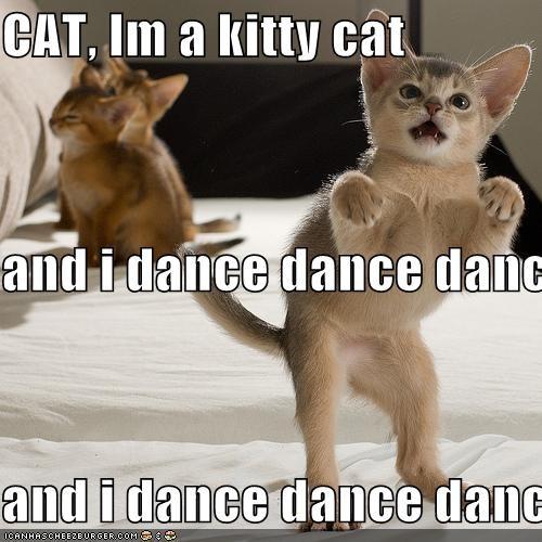 cat im a kitty